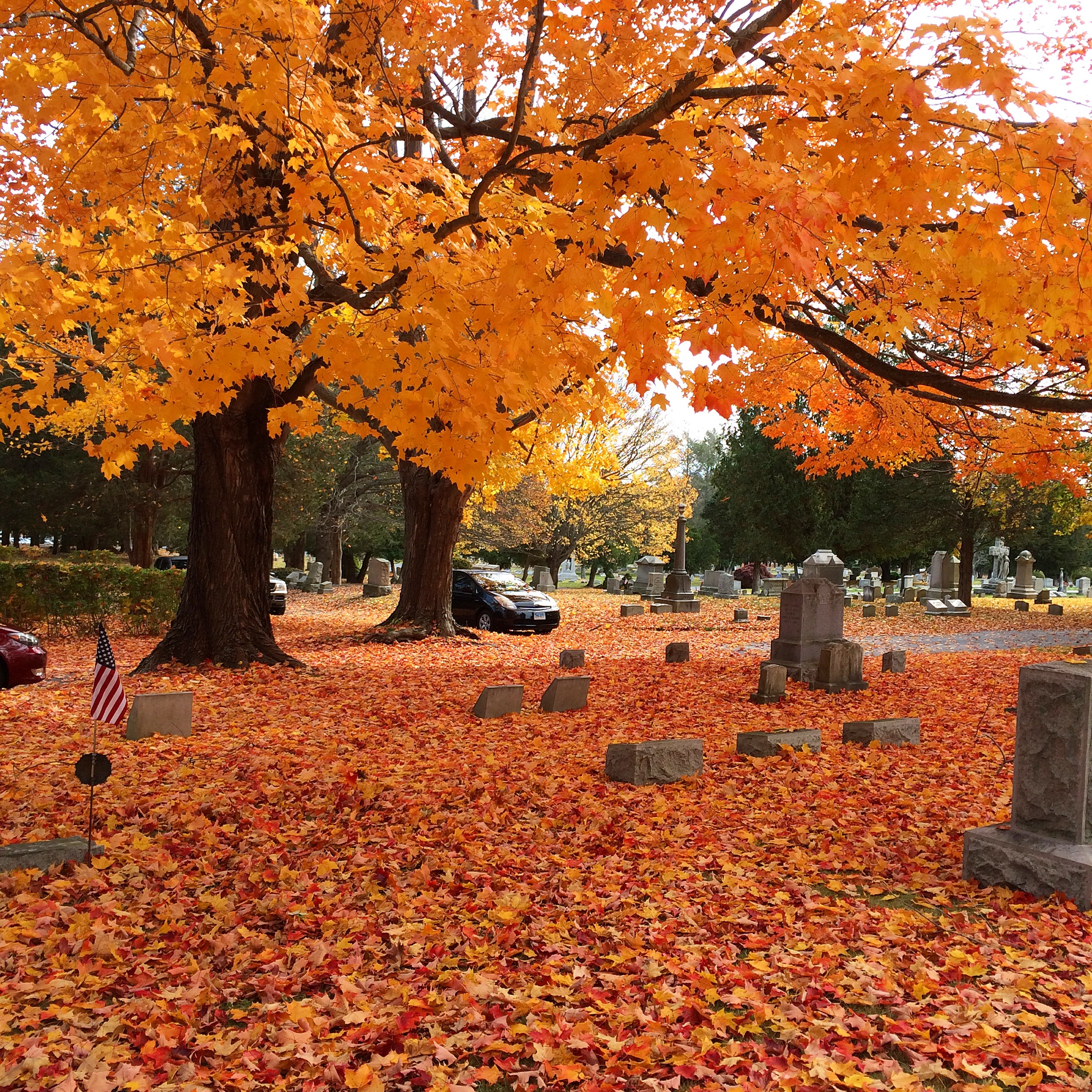 sugar maple foliage covers branches and ground in the graveyard